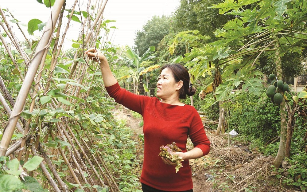 agriculture urbaine Hanoi -4