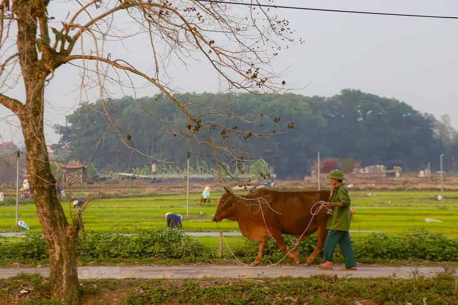 la riziculture inondée autour du village