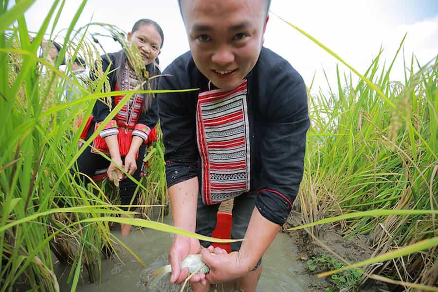 pêche de carpes Hoang Su Phi